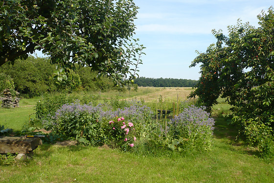 Lilac Cottage - photo 27